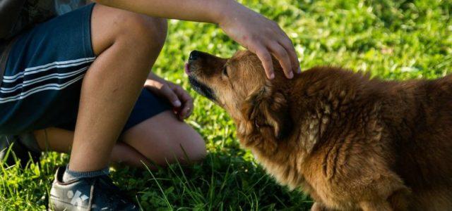 Djeca koja odrastaju uz psa rjeđe obolijevaju od astme