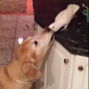 VIDEO: Pogledajte divljenja vrijedno prijateljstvo između psa i papagaja!