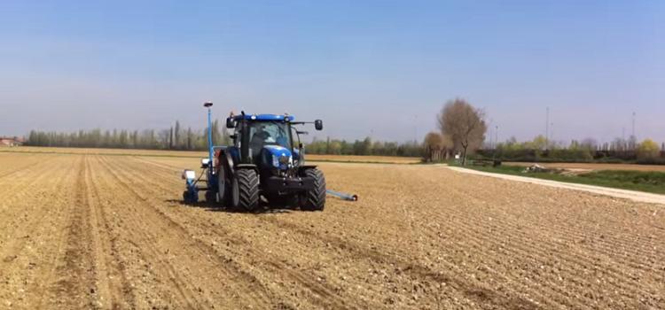 ALARMANTNO OTKRIĆE: Zabranjeno GMO sjeme nezadrživo se širi Hrvatskom!