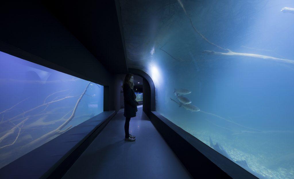 3lhd_224_karlovac_aquarium_photo_by_jure_zivkovic_06
