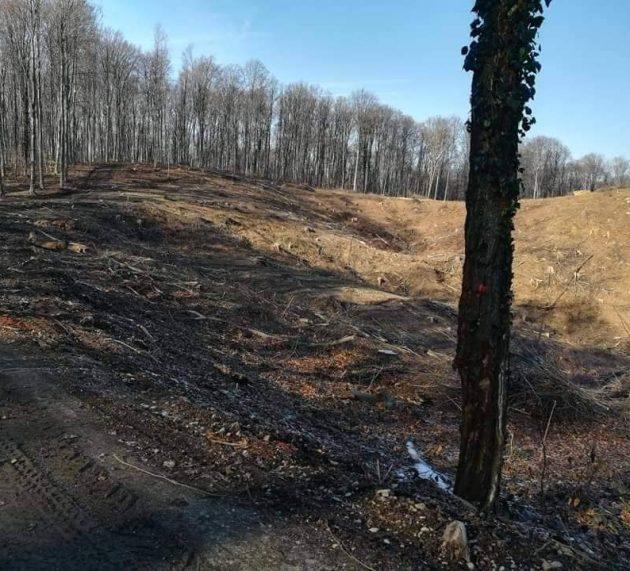 Grgić: Europskoj komisiji poslali smo finalni dokument s DOKAZIMA PLJAČKE naših šuma!
