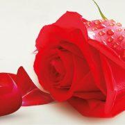 ČESTITKA SVIM DAMAMA: Poštovanje svim majkama, suprugama, sestrama, kćerima i kolegicama