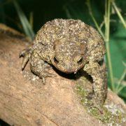 Da žabama nije lako djeca će moći doznati kroz igru, a moći će i DOTAKNUTI živu zelenu gubavicu