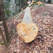 """""""Posao s drvima u RH već dugo je UDRUŽENI ZLOČINAČKI PODUHVAT pljačke i rasprodaje naših šuma!"""""""
