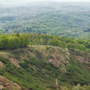 Prikupljaju snimke zločinačkog pustošenja šuma: dokaze šalju Komisiji EU, koja ISTRAŽUJE SKANDAL!