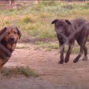 Agresivni psi u RSC Jarun napadaju trkače; vlasnici pasa im prijete davljenjem! Trebaju li se ovi naoružati?!
