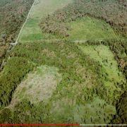 'VIDIO SAM KATASTROFU' Thomas Waitz od EU traži sankcije za brutalnu sječu hrvatskih šuma